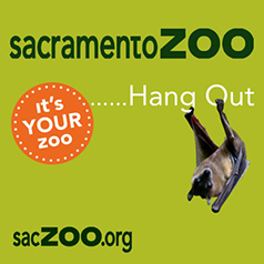 Sac Zoo Hang Out